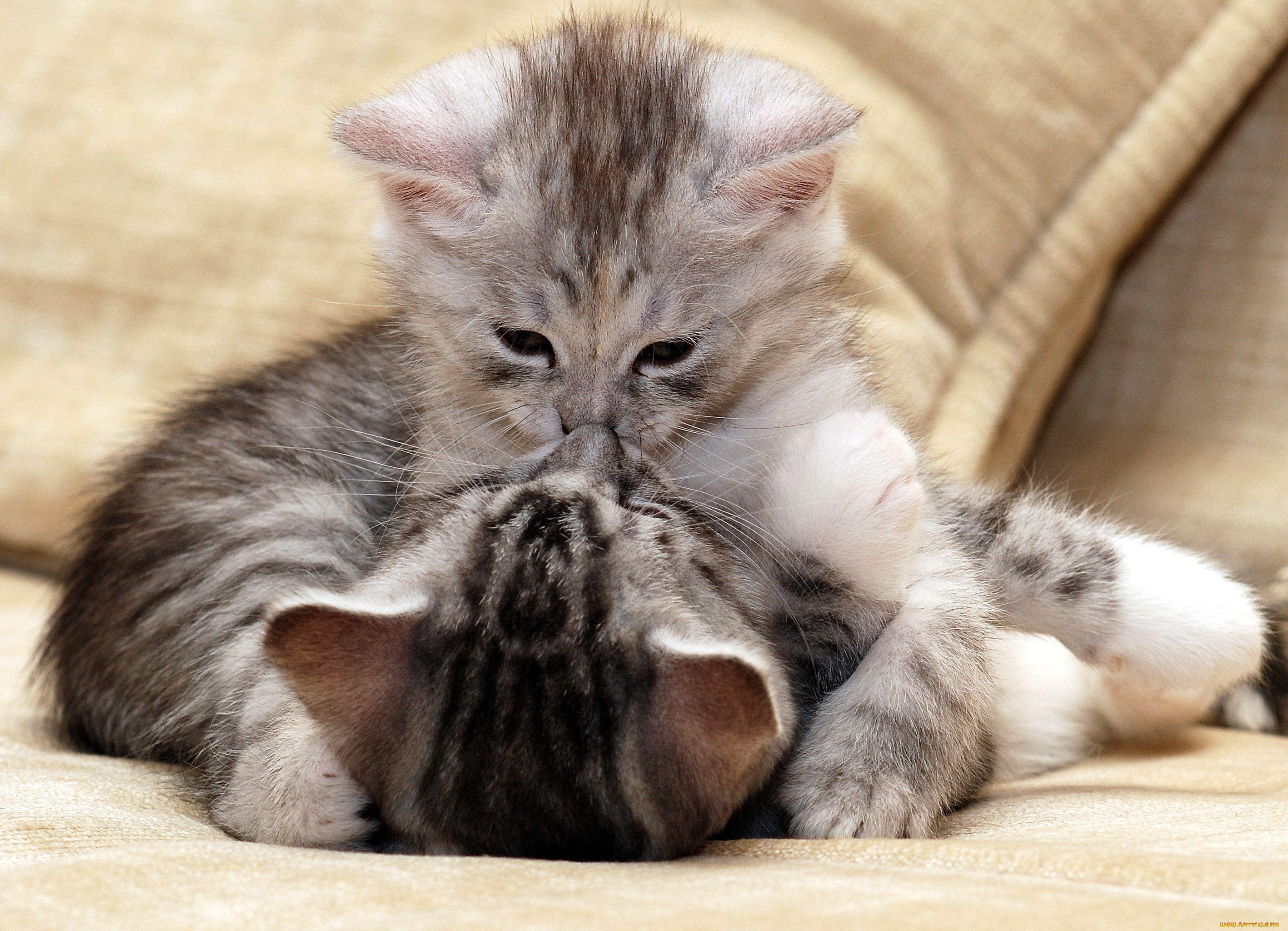 Картинки с животными люблю тебя с надписями